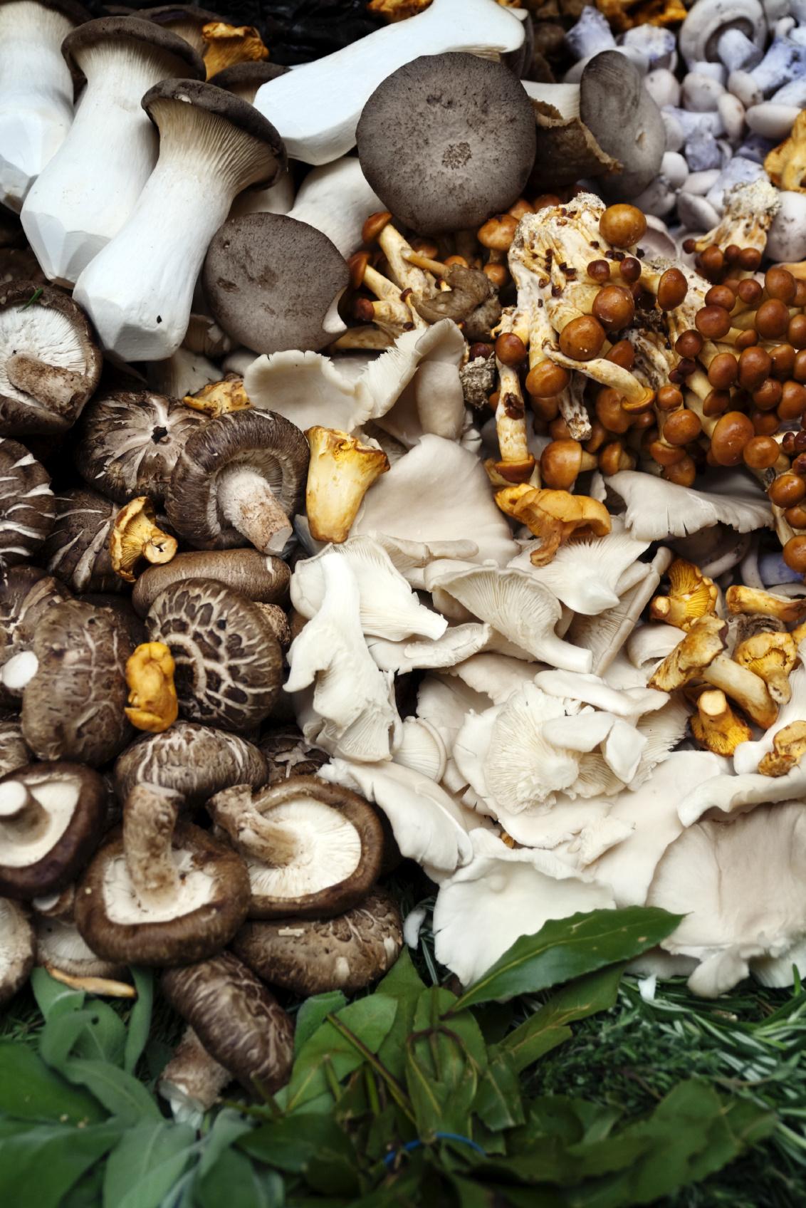 Mushroom Madness At Hyatt Regency Sanctuary Cove Photographer